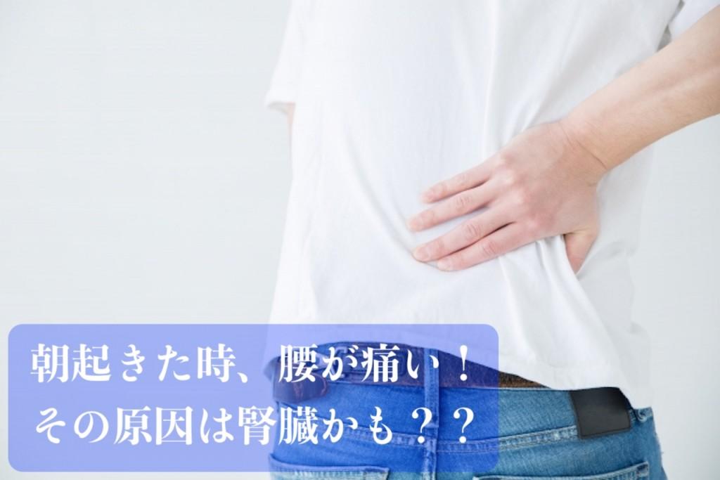 朝の腰の痛み その原因は腎臓!?